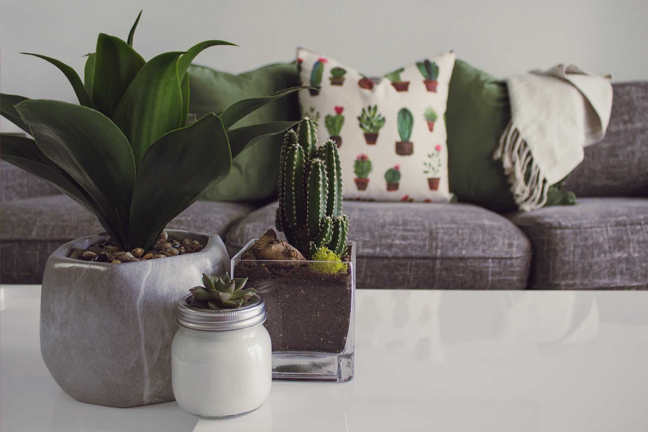Bliss Home Care | Benefits of indoor plants